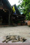 Railay beach cat