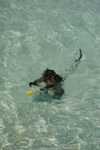 Swimming monkey